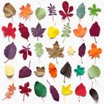 Jesenje lišće od papira