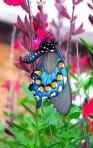 leptir u prirodnom okruženju