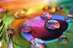paunove boje