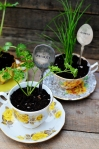 Kašike kao oznaka za začinsko bilje