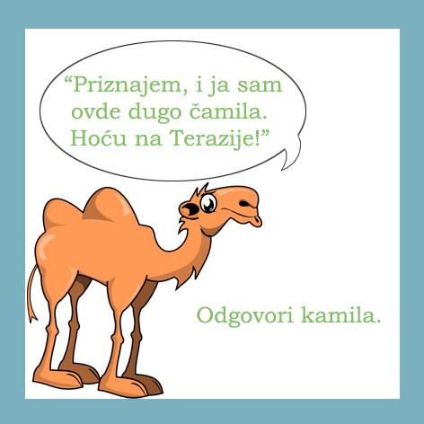 3_kamila